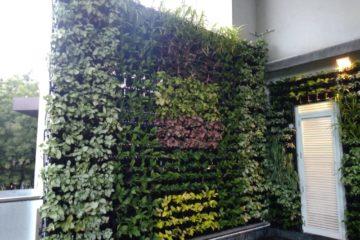 Vertical Garden Pune