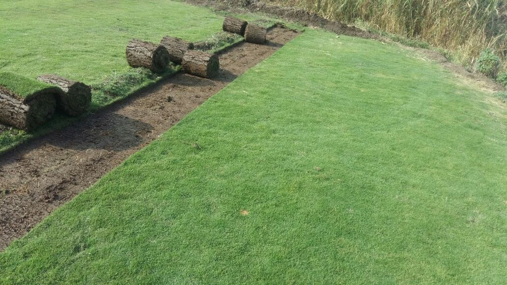 lawn grass pune